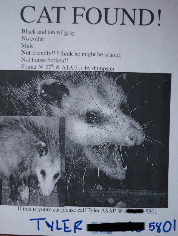 http://blog.nextdayflyers.com/wp-content/uploads/2014/10/funny-missing-cat-possum-poster.png